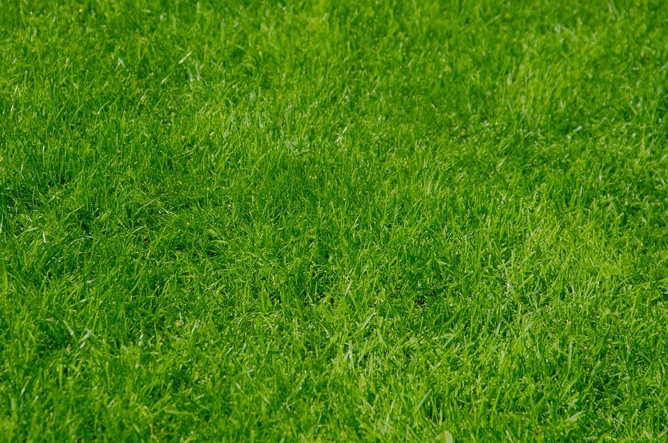 Afbeeldingsresultaat voor foto gras
