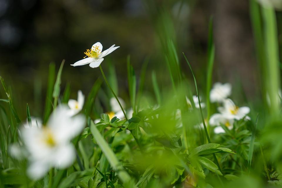 çiçek Doğa Arka Plan Masaüstü Pixabayde ücretsiz Fotoğraf