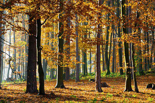 Forest, Jesen, Green, Nature, Trees