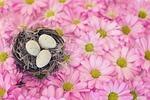 bird's nest, bird eggs, pink daisies