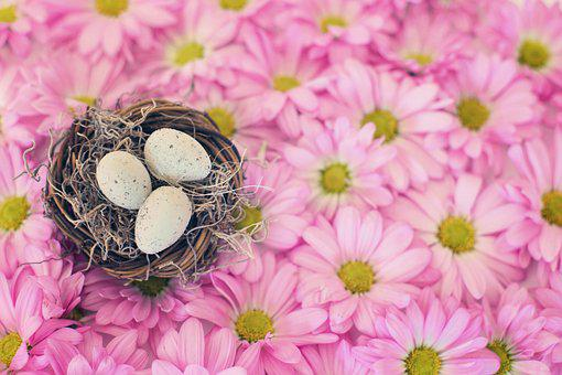 Pastel images pixabay download free pictures birds nest bird eggs pink daisies mightylinksfo
