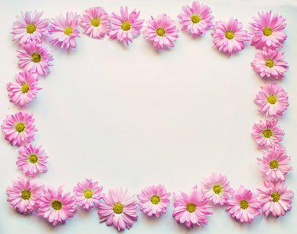 pink daisies border frame copy space