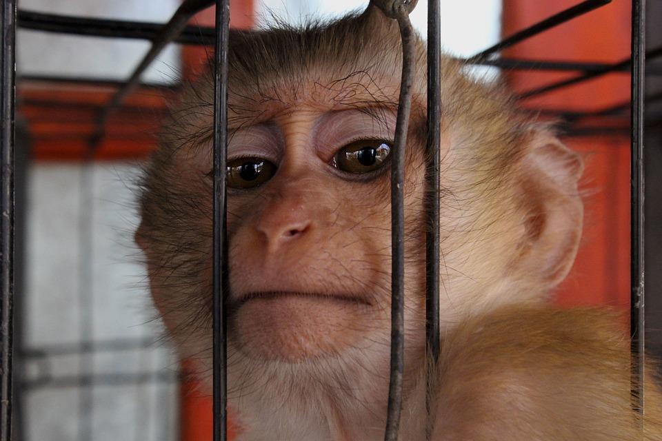 Mono, Animales, Zoológico, Silvestre, Naturaleza