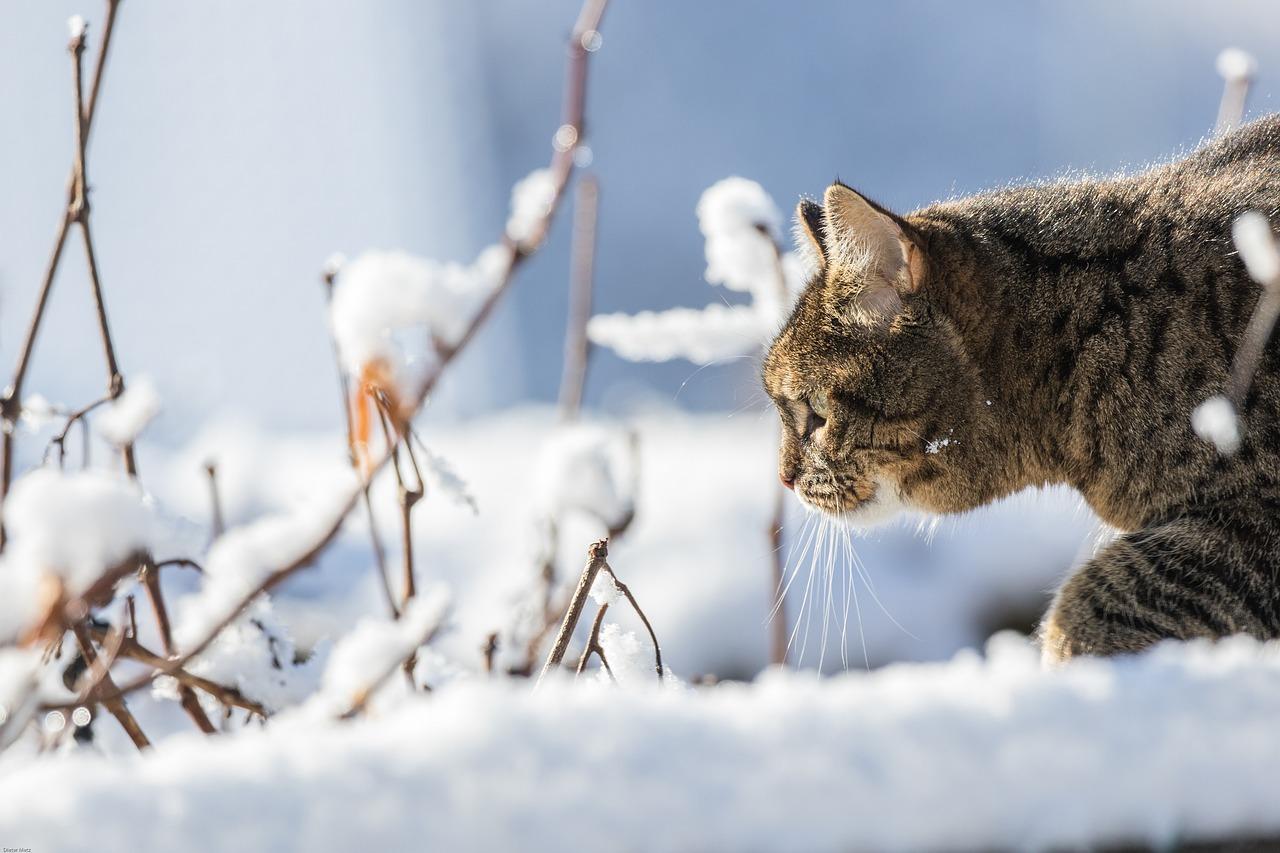 подобранная картинка картинки кошек зимние типа конструкции бассейна