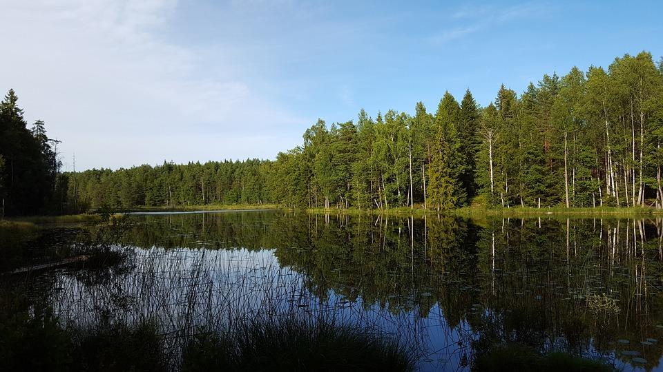 Resultado de imagem para florestas suecia