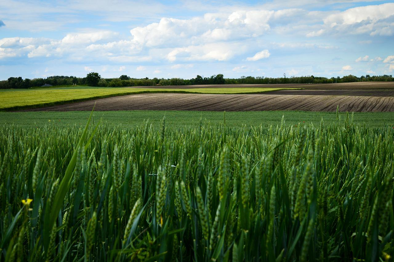Поля зерновых картинки