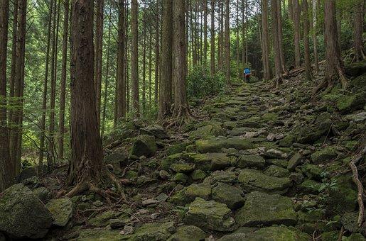 風景, 日本, 熊野古道, 伊勢路, 石畳, 歴史, 歩く, トレッキング