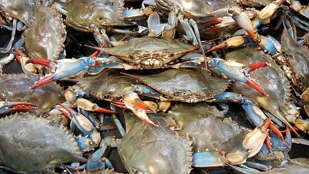 Crab Blue Live Shellfish Seafood Crustacea
