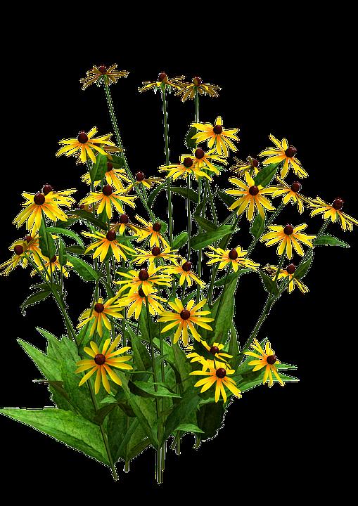 Flora Arbusto De Flor 183 Imagen Gratis En Pixabay