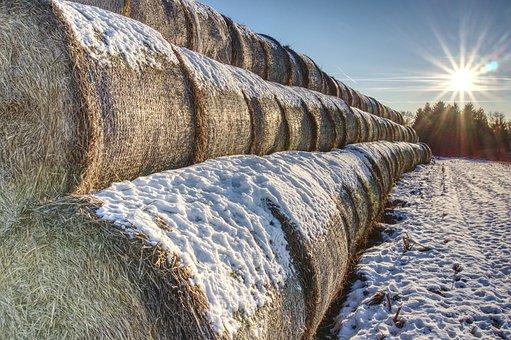 Snowy, Straw Bales, Straw, Snow, Winter