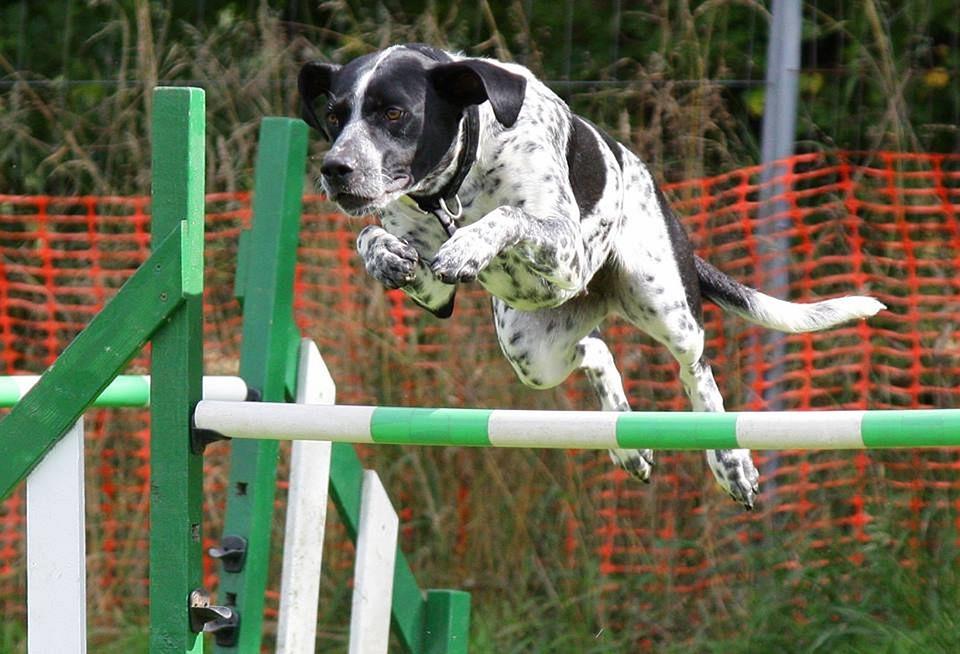 Agility Dog Training Utah