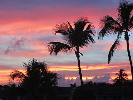 Landscape, Sunset, Palm Trees, Paradise