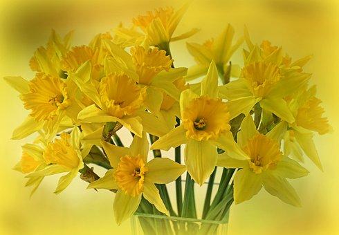 Daffodils Osterglocken Flowers Spring Bouq