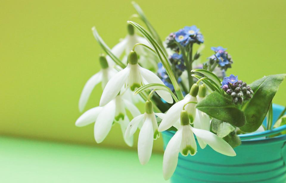 Snowdrop, Forget Me Not, Flowers, Bucket