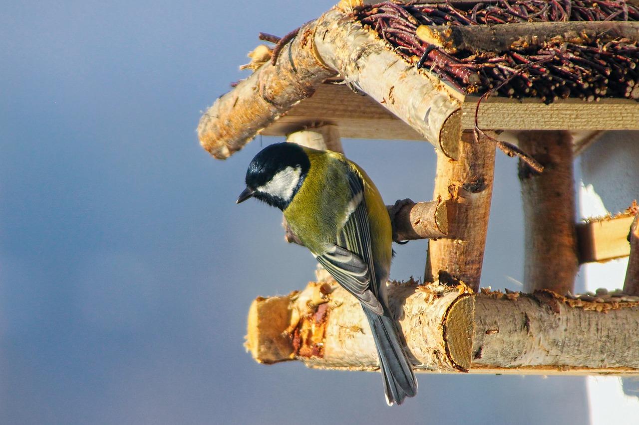 самое главное картинки кормить птиц зимой в кормушке один уголок дома
