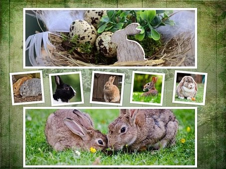 Rabbit Easter Collage Background Symb