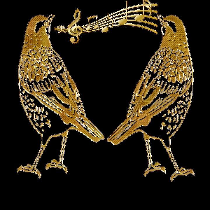contorno de aves pássaros abstrato imagens grátis no pixabay