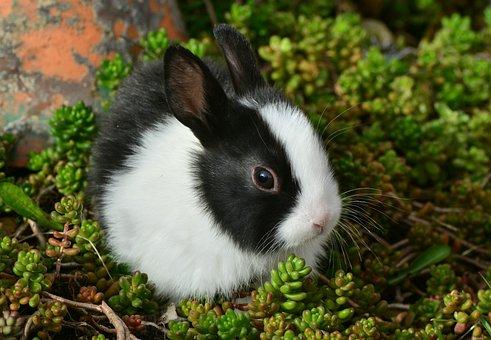 2 000 Kostenlose Hase Kaninchen Fotos Pixabay
