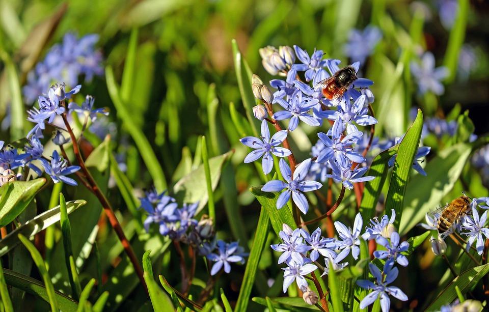 Welche Blumen Blühen Im März