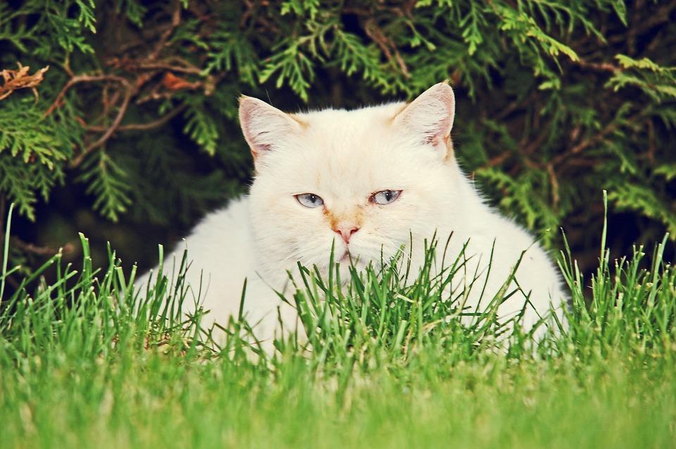 Biela dievča mačička pic