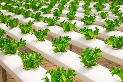 Greenhouse, Organic, Farming, Hydroponic
