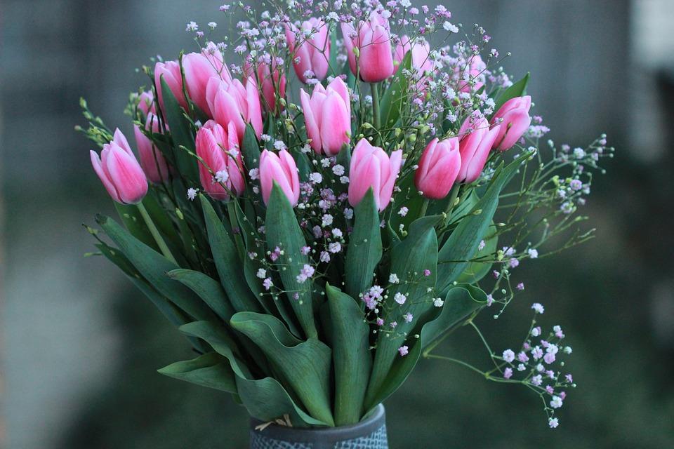 Floare Lalele Colorat Fotografie Gratuită Pe Pixabay