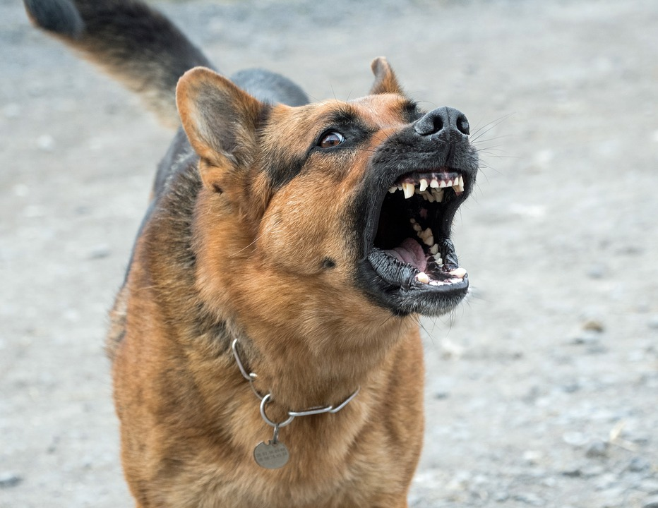 Dog, Bad, Dangerous, German Shepherd, To Bark