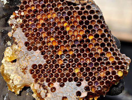 Honeycomb, Pollen Warehousing, Honey
