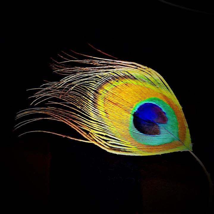 Peacock Feather Images Pixabay Download Free Pictures