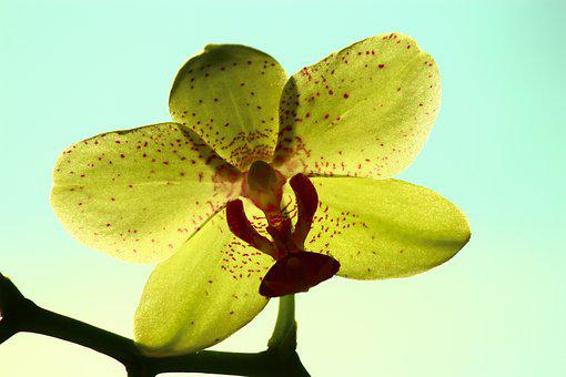 yellow orchid bright rear space orchid - Orchid