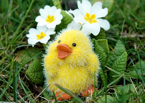 Easter, Chicks, Easter Decoration, Cute