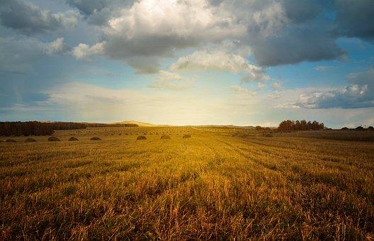 线上销售是大势所趋,农产品如何借助互联网转型升级?