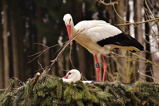 A stork building her nest with a baby stork inside to signify