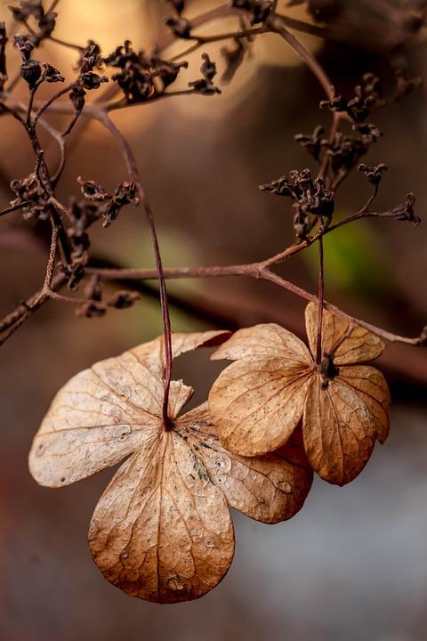 Bunga Musim Gugur Alam Foto Gratis Di Pixabay