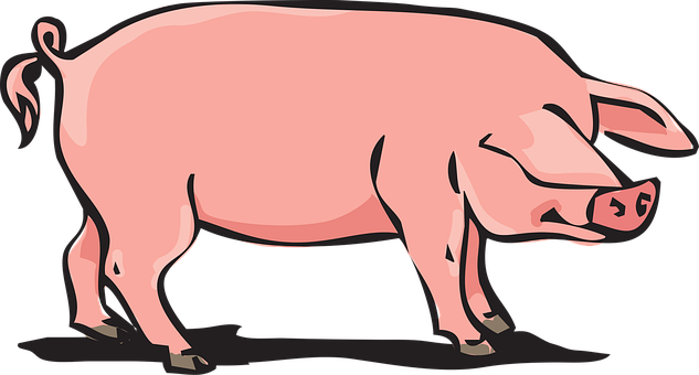 Pork Animal Farm Pig
