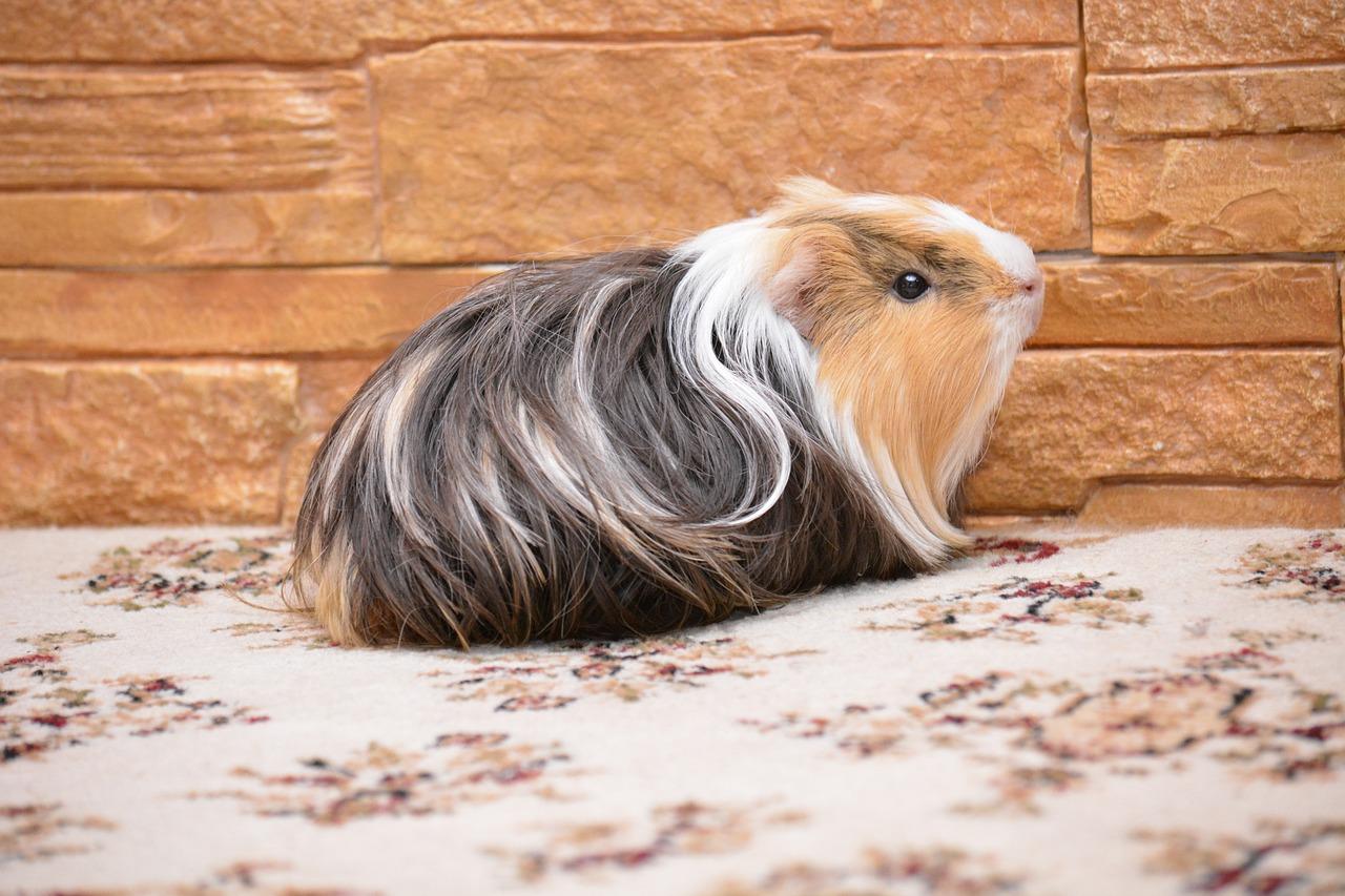 домашние декоративные животные фото объявления