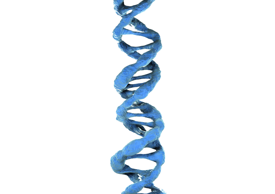 3d dna png www pixshark com images galleries with a bite dna clipart black and white DNA Vector Art