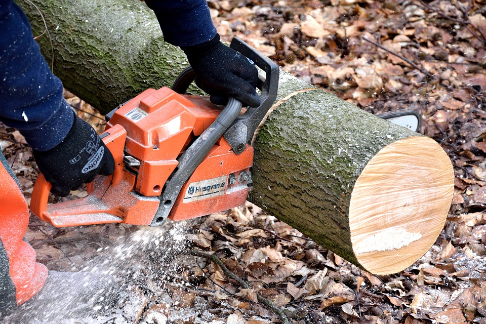 14 Best Small Chainsaws 2021 (Reviews - Guide)
