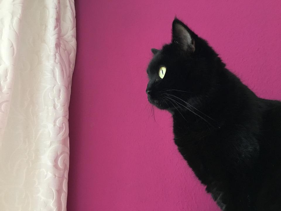 čierna mačička comtesty čierne porno