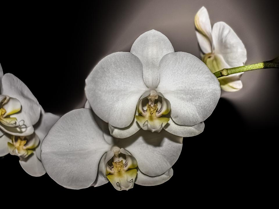Image Led Care For Orchids 2