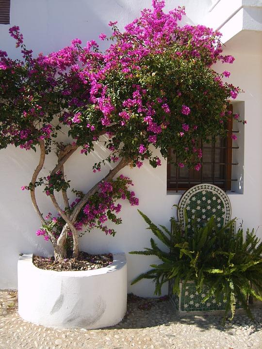 Altea, Árbol, Calle, Árboles, Casas, España, Casa