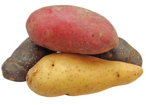 Potato, Fingerling, Rainbow, Potatoes