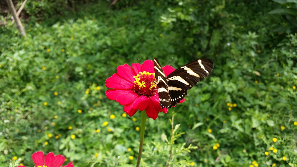 Butterfly Garden Flowers , Free photo on Pixabay