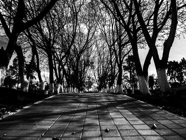 Calle blanco y negro oto o foto gratis en pixabay for Aparador blanco y negro