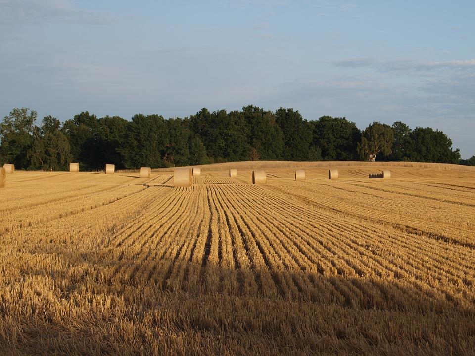 fardos de paja campo paja agricultura