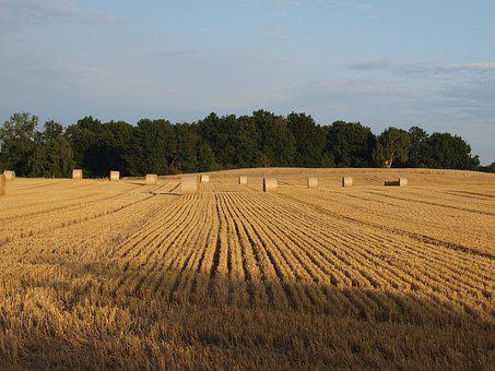Straw Bales, Field, Straw, Agriculture