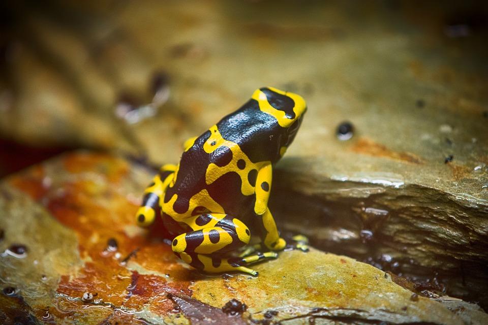Frosch Kröte Tier · Kostenloses Foto auf Pixabay