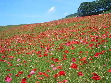 Blumen garten  Blumengarten - Kostenlose Bilder auf Pixabay