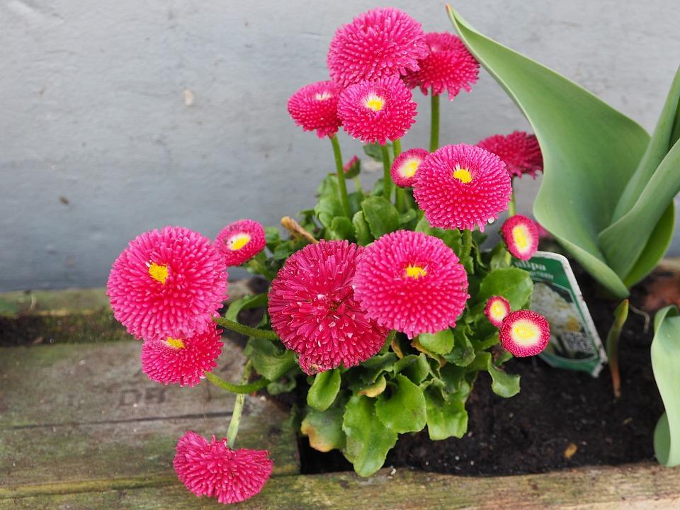 Spring flowers pink close free photo on pixabay spring flowers pink spring close up small flowers mightylinksfo