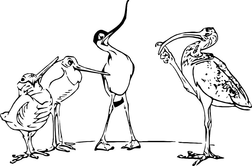 Croquis Dessin Oiseau Noir Et Image Gratuite Sur Pixabay